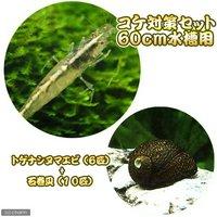 コケ対策セット 60cm水槽用 トゲナシヌマエビ(6匹) + 石巻貝(10匹)