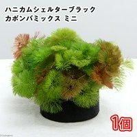 メダカ・金魚藻 ブラックハニカムシェルター カボンバミックス ミニ(1個)