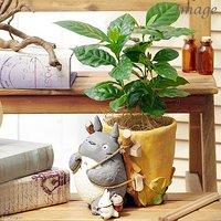 ジブリプランターカバー トトロのお届けよいこらしょ 観葉植物セット(コーヒーの木)