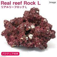 Real Reef Rock(リアルリーフロック) バクテリア付き Lサイズ(1個)(形状お任せ)