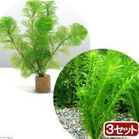 ライフマルチ(茶) メダカ金魚藻セット(3セット)