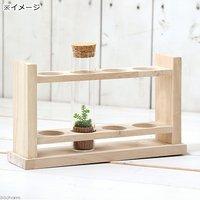 苔Terrarium スリムガラスセット(木製台座付き) クラマゴケ 説明書付