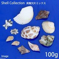 貝殻 シェルコレクション 貝殻欠片ミックス(100g)(形状おまかせ)