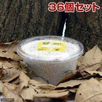 菌糸カップ G-カップ 120cc 36個  別途送料