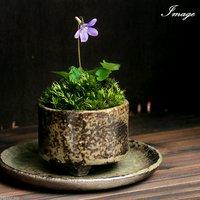 苔盆栽 おまかせ益子焼鉢植え スミレ(菫)丸型 小(1鉢)