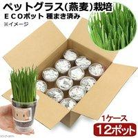 種まき済み ペットグラス(燕麦)栽培 ECOポット(12ポット)