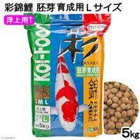 彩錦鯉 胚芽育成用 Lサイズ 5kg 餌 飼料