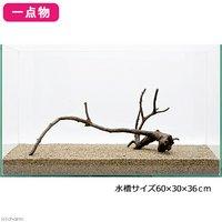 一点物 極上流木単体 60cm水槽用 221067