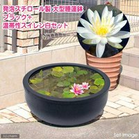 大型睡蓮鉢超軽量タイプ ブラック+温帯性睡蓮白 説明書付   (休眠株)