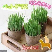 ペットグラス ワンちゃんの草 燕麦 直径8cmECOポット植え(無農薬)(3ポットセット) 犬のおやつ 北海道冬季発送不可