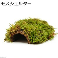 モスシェルター(ハイゴケ&パコツリー) トカゲ ヤモリ