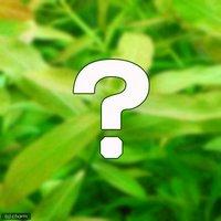 おまかせハイグロフィラ(水上葉) 2種×5本セット(無農薬)(計10本)