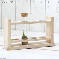 苔Terrarium スリムガラスセット(木製台座付き) コウヤノマンネングサ 説明書付