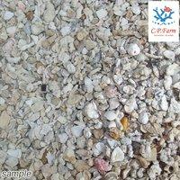 ライブクラッシュコーラル・シェルピース 5kg(約4L) バクテリア付きサンゴ砂・貝殻ミックス(0.32個口相当)別途送料