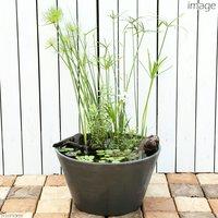 睡蓮鉢グレー 緑を中心としたシンプルレイアウトセット