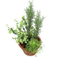 ハーブの寄せ植え モスポット 品種おまかせ 6号(1鉢) 家庭菜園