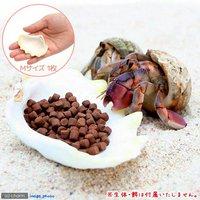貝殻 シェルコレクション シャコガイ Mサイズ(1枚)(形状お任せ) オカヤドカリ食器