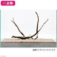 一点物 極上流木単体 45cm水槽用 210551