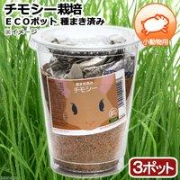 種まき済み チモシー栽培 ECOポット(3ポット) 小動物用