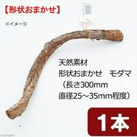 天然素材 形状おまかせ モダマ (長さ300mm 直径25~35mm程度)