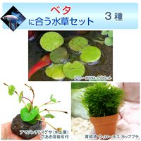 ベタに合う水草セット 3種(無農薬)(1セット)(説明書付)