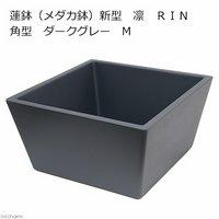 睡蓮鉢(メダカ鉢) 新型 凛 RIN 角型 ダークグレー M 睡蓮鉢金魚鉢メダカ鉢