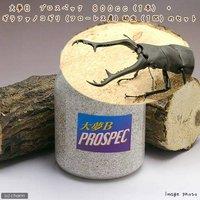 ギラファノコギリクワガタ(フローレス産)幼虫(1匹) + 大夢B プロスペック 800cc(1本)(説明書付)