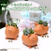 私のオアシス ~多肉寄せ植え アニマルテラコッタ(ブタネコネズミの3鉢セット)~(説明書付)