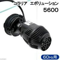 取寄せ商品 60Hz コラリア エボリューション 5600(5200) 60Hz(西日本用)