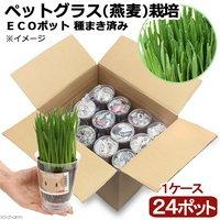 種まき済み ペットグラス(燕麦)栽培 ECOポット(24ポット)