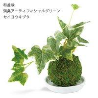 和盆栽 消臭アーティフィシャルグリーン セイヨウキヅタ
