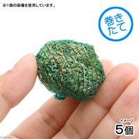 巻きたて ヘアーグラス ショートボール(無農薬)(5個)