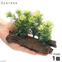 アーティフィシャルプランツ(人工水草)流木付 Cypress(1個)