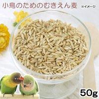 小鳥のためのむきえん麦 50g(殻なし) 鳥 フード 餌 おやつ 無添加 無着色
