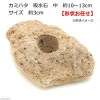 カミハタ 吸水石 中 約10~13cm 穴サイズ 約3cm テラリウム パルダリウム 着生 コケ