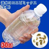 淡水ヨコエビミックス(30匹)