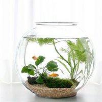 (水草)おしゃれなガラス製金魚鉢 太鼓鉢 大 金魚飼育セット 説明書付
