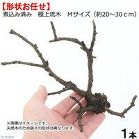 形状お任せ 煮込み済み 極上流木 Mサイズ(約20~30cm)1本
