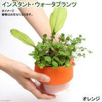 インスタントウォータプランツ(寄せ植え)(オレンジ)(1鉢)