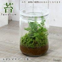 苔Terrarium おまかせオアシス苗 ガラスボトルL 説明書付