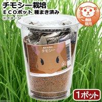 種まき済み チモシー栽培 ECOポット(1ポット) 猫用