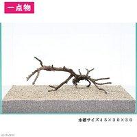 一点物 極上流木単体 45cm水槽用 107138