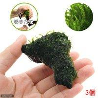 巻きたて フレームモス付 流木 ミニサイズ(5~8cm)(無農薬)(3本)