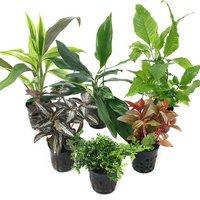 おまかせテラリウム用植物 3種セット