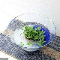 水辺植物  私の小さなアクアリウム ~シャリシャリグラスの幸せムチカセット~