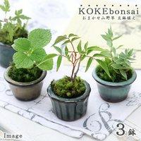 苔盆栽 おまかせ山野草 豆鉢植え(3鉢)