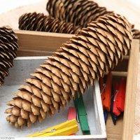 長野県産 長い松ぼっくり 特大サイズ 1個 小動物のおもちゃ パインコーン 国産 無添加 無着色