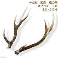 一点物 国産 鹿の角 オブジェ 1組 SK-004 インテリア