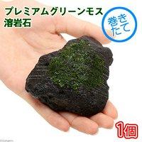 巻きたて プレミアムグリーンモス 溶岩石(5~8cm)(無農薬)(1個)
