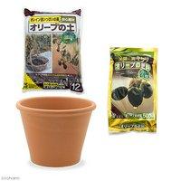 花ごころ オリーブの土+オリーブの肥料+デローマ バッサム 直径31cm×23cm セット